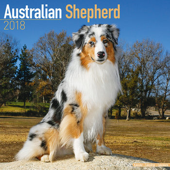 Calendário 2018 Australian Shepherd