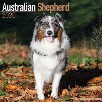 Calendário 2020  Australian Shepherd