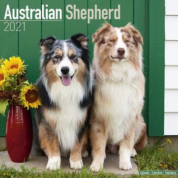 Calendário 2021 Australian Shepherd