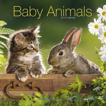 Calendário 2019  Baby Animals