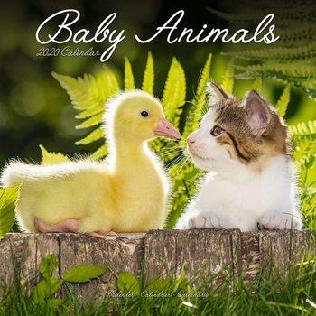 Calendário 2020  Baby Animals