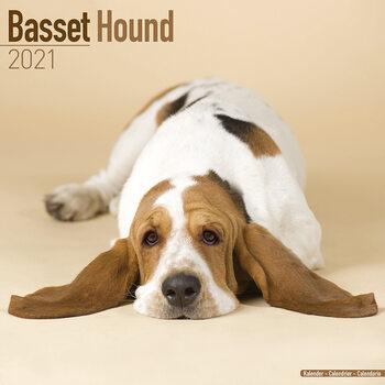 Calendário 2021 Basset Hound