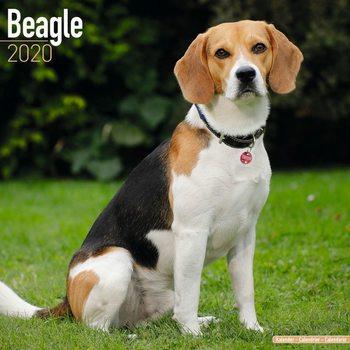 Calendário 2020  Beagle