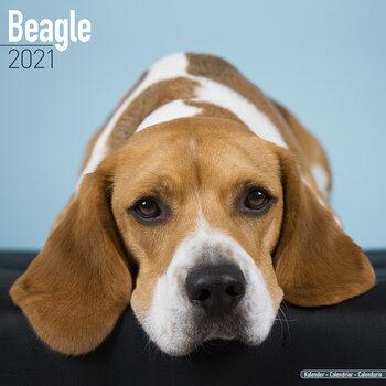 Calendário 2021 Beagle