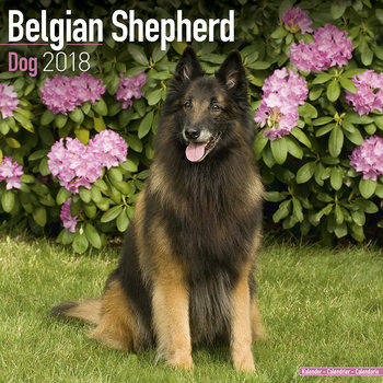 Calendário 2018 Belgian Shepherd Dog
