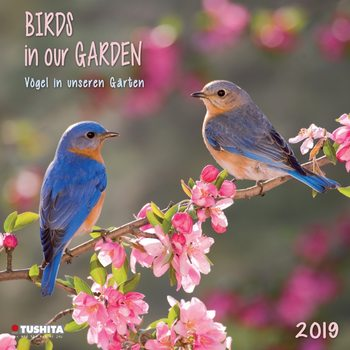 Calendário 2019  Birds in our Garden