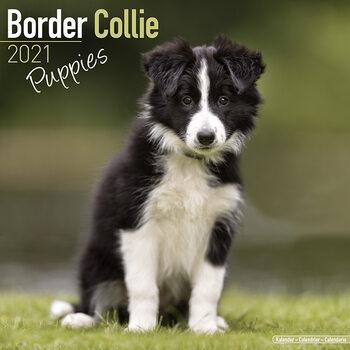 Calendário 2021 Border Collie