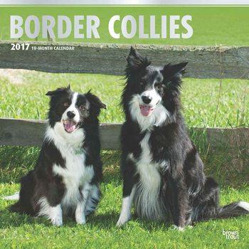 Calendário 2017 Border Collies