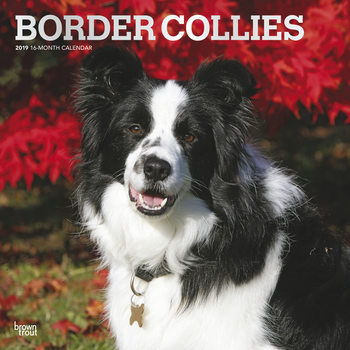 Calendário 2019  Border Collies