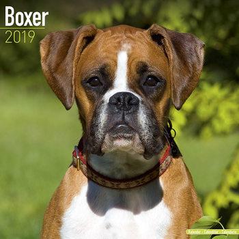 Calendário 2019  Boxer (Euro)