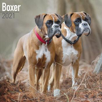 Calendário 2021 Boxer