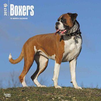 Calendário 2017 Boxers