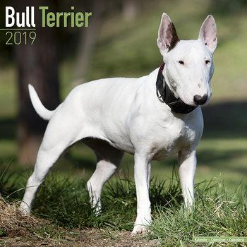 Calendário 2019  Bull Terrier
