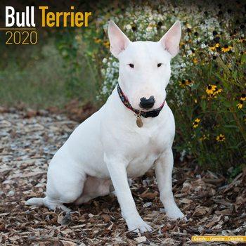 Calendário 2020  Bull Terrier