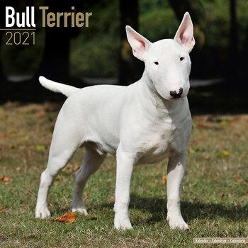 Calendário 2021 Bull Terrier