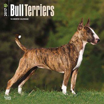 Calendário 2017 Bull Terriers