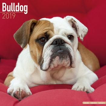 Calendário 2019  Bulldog