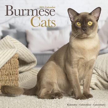 Calendário 2021 Burmese Cats