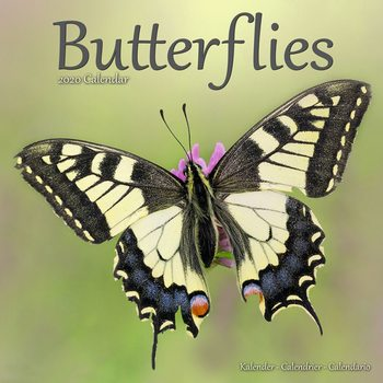 Calendário 2020  Butterflies