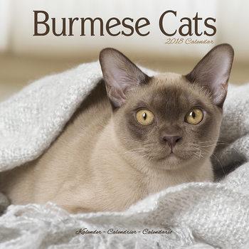 Calendário 2018 Cats - Burmese