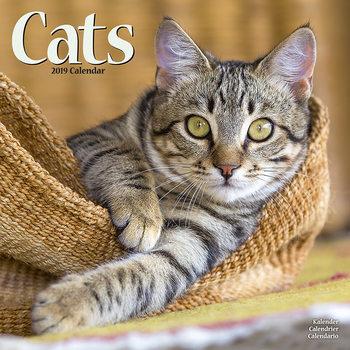 Calendário 2019  Cats