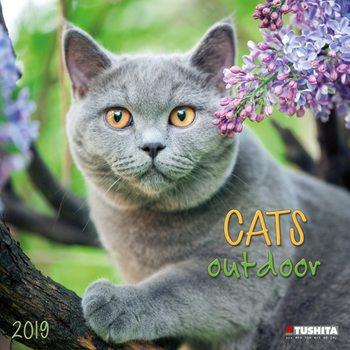 Calendário 2019  Cats Outdoors