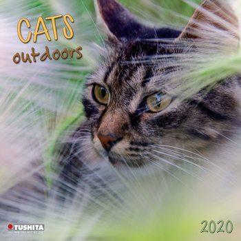 Calendário 2020  Cats Outdoors