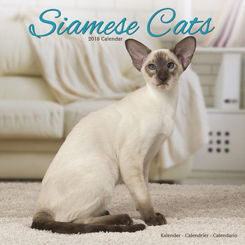 Calendário 2018 Cats - Siamese