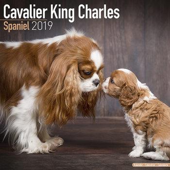 Calendário 2019  Cavalier King Charles