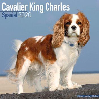 Calendário 2020  Cavalier King Charles