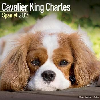 Calendário 2021 Cavalier King Charles