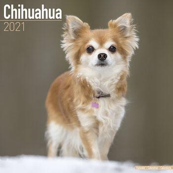 Calendário 2021 Chihuahua