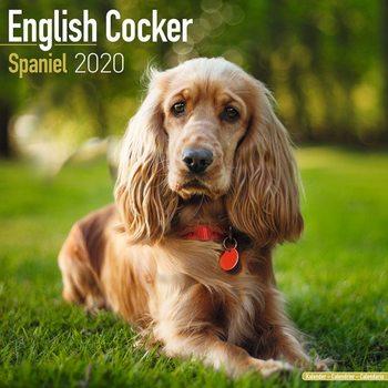 Calendário 2020  Cocker Spaniel