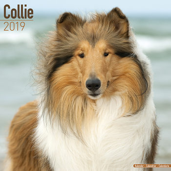 Calendário 2019  Collie