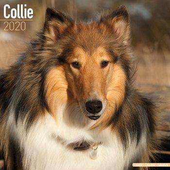Calendário 2020  Collie