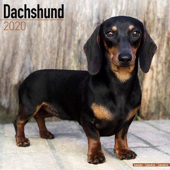 Calendário 2020  Dachshund