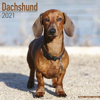 Calendário 2021 Dachshund