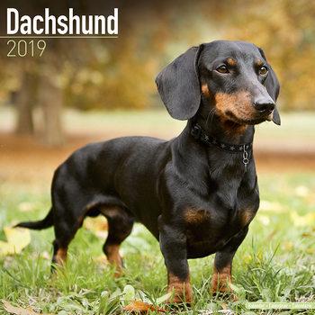 Calendário 2019  Dachsund