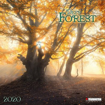 Calendário 2020  Deep Forest