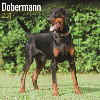 Calendário 2017 Dobermann