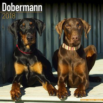 Calendário 2018 Dobermann