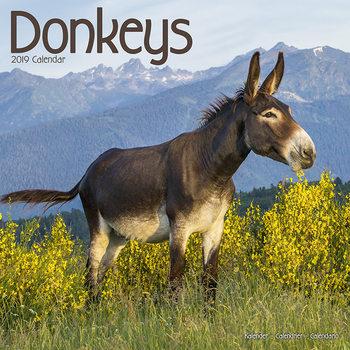 Calendário 2019  Donkeys