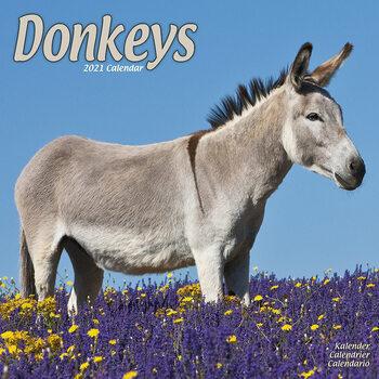 Calendário 2021 Donkeys