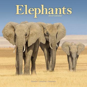 Calendário 2019  Elephants