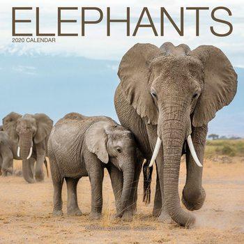 Calendário 2020  Elephants