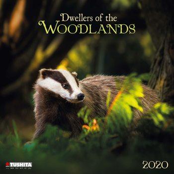 Calendário 2020  Forest Creatures