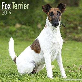 Calendário 2019  Fox Terrier