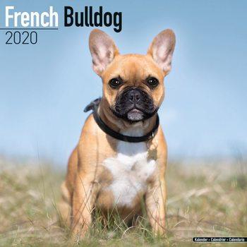 Calendário 2020  French Bulldog