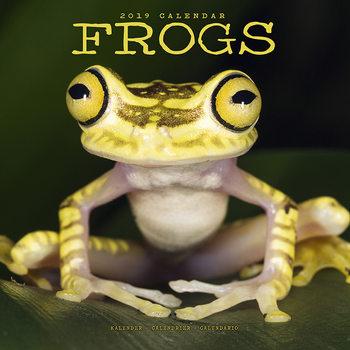 Calendário 2019  Frogs