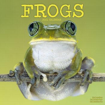 Calendário 2021 Frogs
